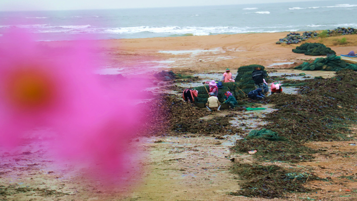 第382期 海蠣子育肥忙春節就能上市