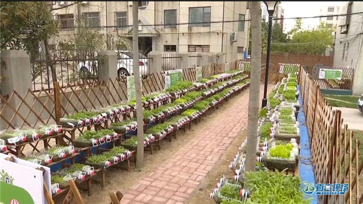 第392期 小区惊现瓶子菜园玩出新创意