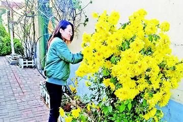 """胶南街道小报屋村家家墙外有花池,户户都是""""美丽庭院"""""""