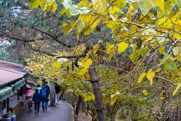 初冬之时雨中畅游 北九水溪流奔腾 彩叶季还在