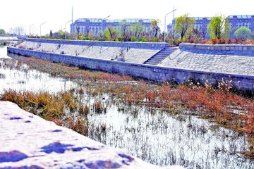 曾经垃圾河 如今野鸭游