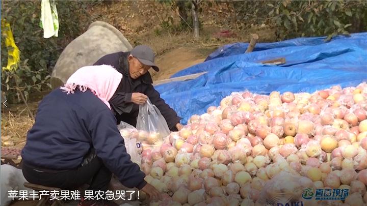 第405期 苹果丰产卖果难 果农急哭了!
