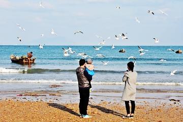 又见龙湾海鸥舞翩跹