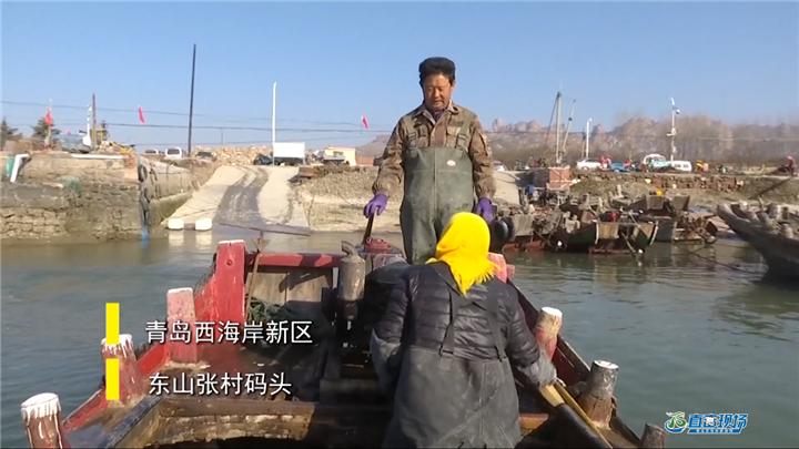 第420期 海蠣子養殖大揭秘