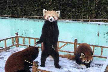"""雪后西海岸美景,小动物们""""乐开了花""""!"""