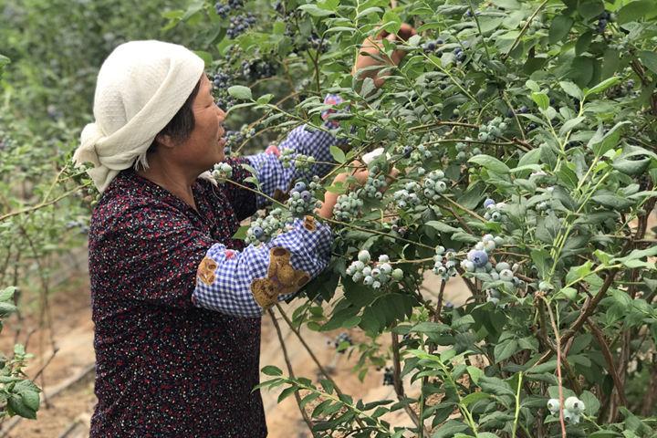 海青镇一种植基地流转土地千余亩,为农民提供就近就业岗位