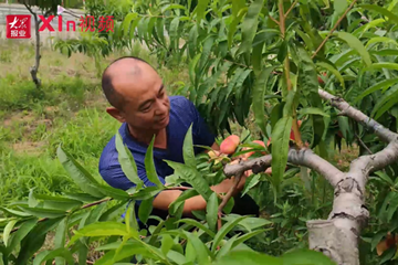 Xin视频丨玩转张家楼,一年四季鲜果不断