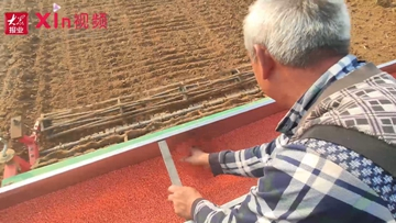 Xin视频|三千亩小麦开种