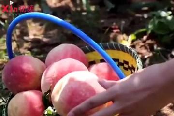 Xin视频|生态化片区改造 山沟变成聚宝盆