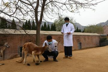 动物体检 健康过冬