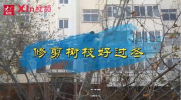 Xin 视频丨修剪树枝好过冬