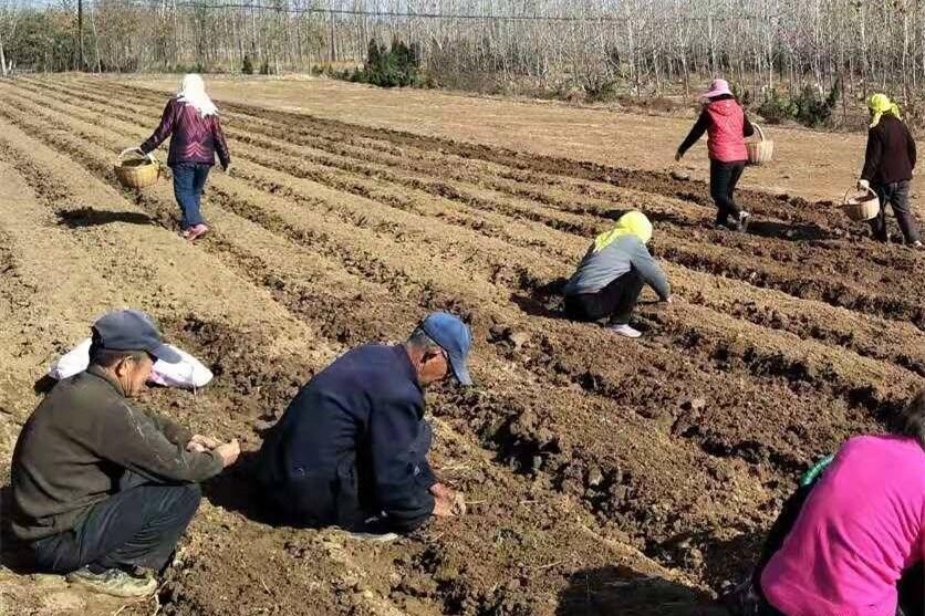 走向我们的小康生活|泊里镇:探索新型农业 带动村民致富