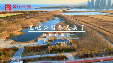 Xin视频|航拍西海岸——湿地公园春天来了