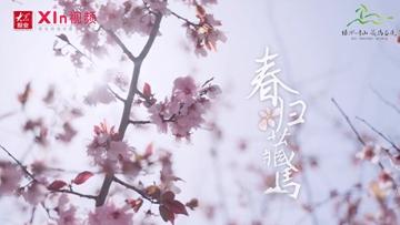 Xin視頻|春歸藏馬