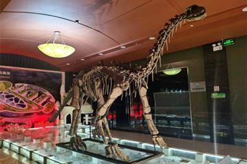 到贝壳博物馆看神奇古生物钟