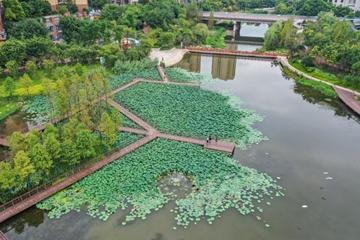 重庆南岸:苦竹溪生态修复显成效