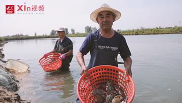 Xin视频|蟹逅丰收汇 再约岛耳河
